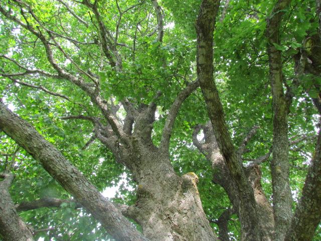 Up a Tree (4/6)