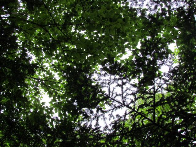Up a Tree (5/6)