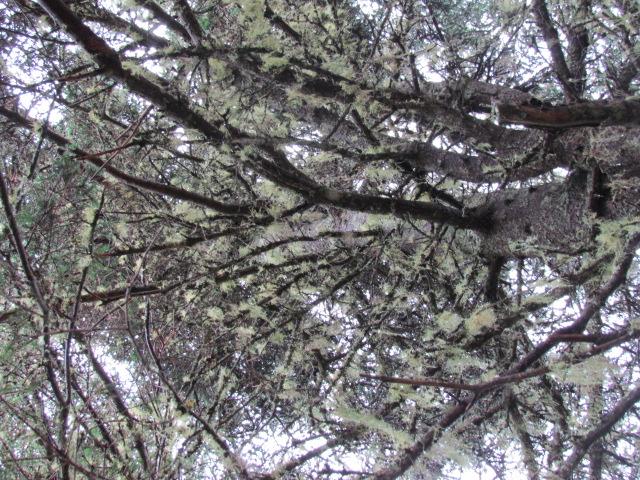 Up a Tree (1/6)