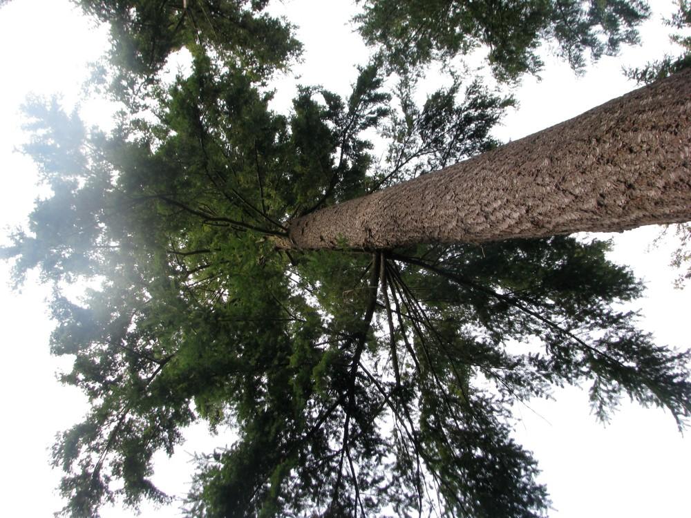 Up a Tree (2/6)