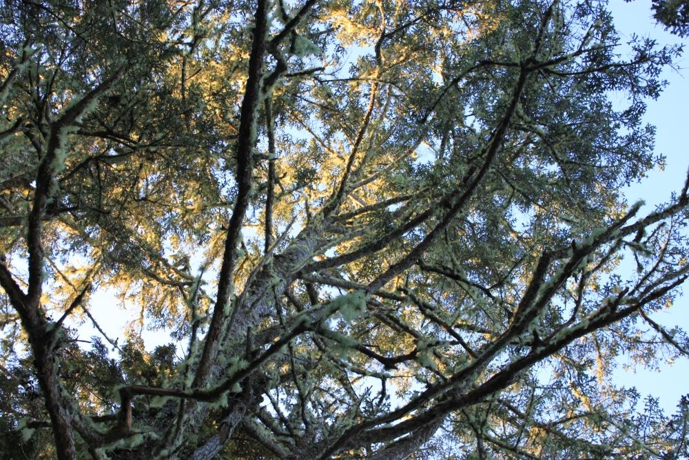 Guest Tree Pics (3/6)
