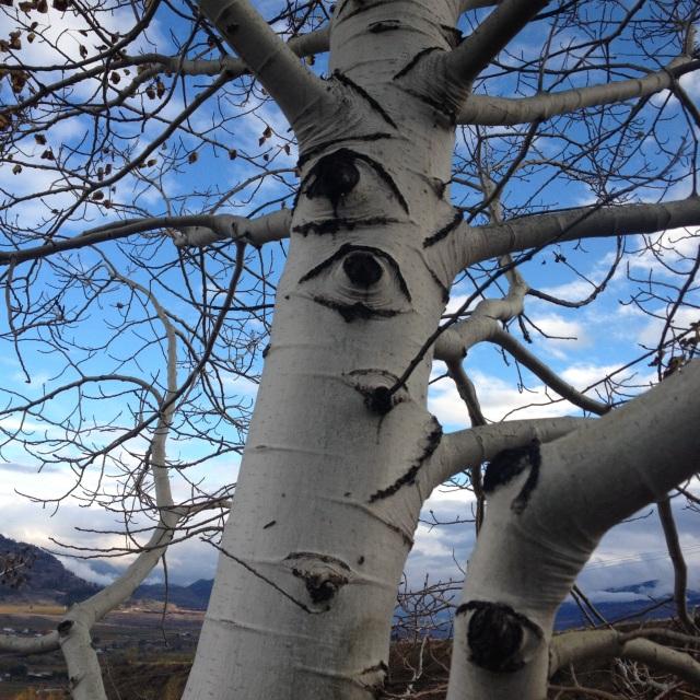 Eyes Trees