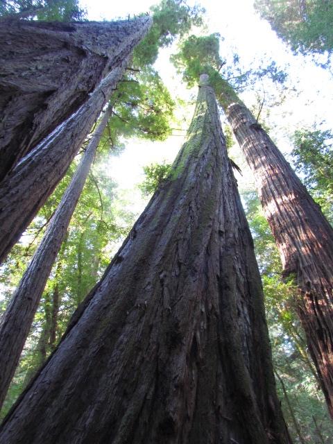 Guest Tree Pics (5/6)