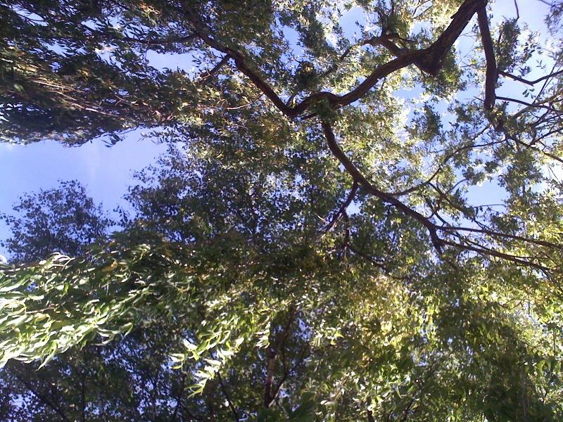 Guest Tree Pics (2/6)