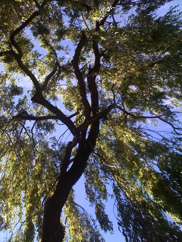 Guest Tree Pics (1/6)