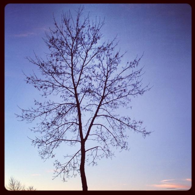 Edmonton Tree